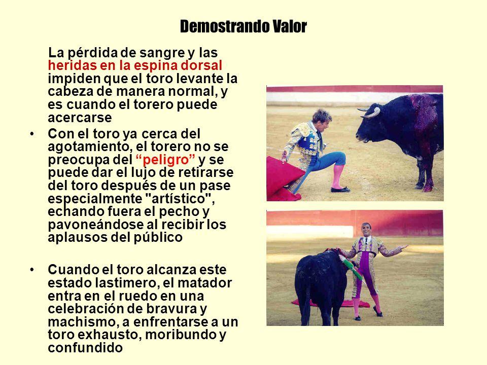 Demostrando Valor La pérdida de sangre y las heridas en la espina dorsal impiden que el toro levante la cabeza de manera normal, y es cuando el torero