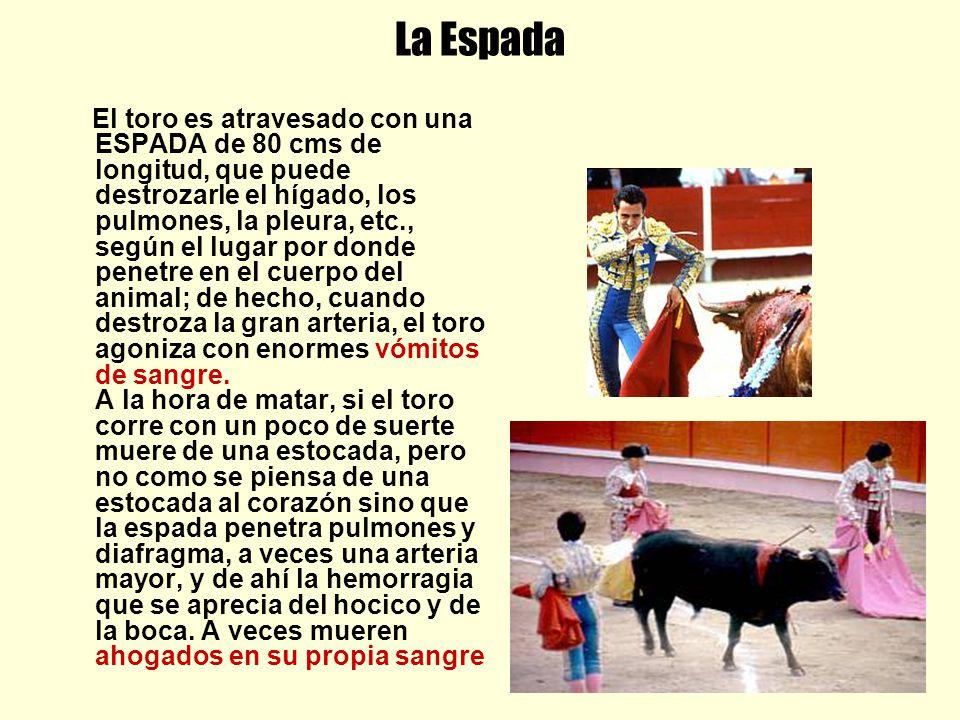 La Espada El toro es atravesado con una ESPADA de 80 cms de longitud, que puede destrozarle el hígado, los pulmones, la pleura, etc., según el lugar p