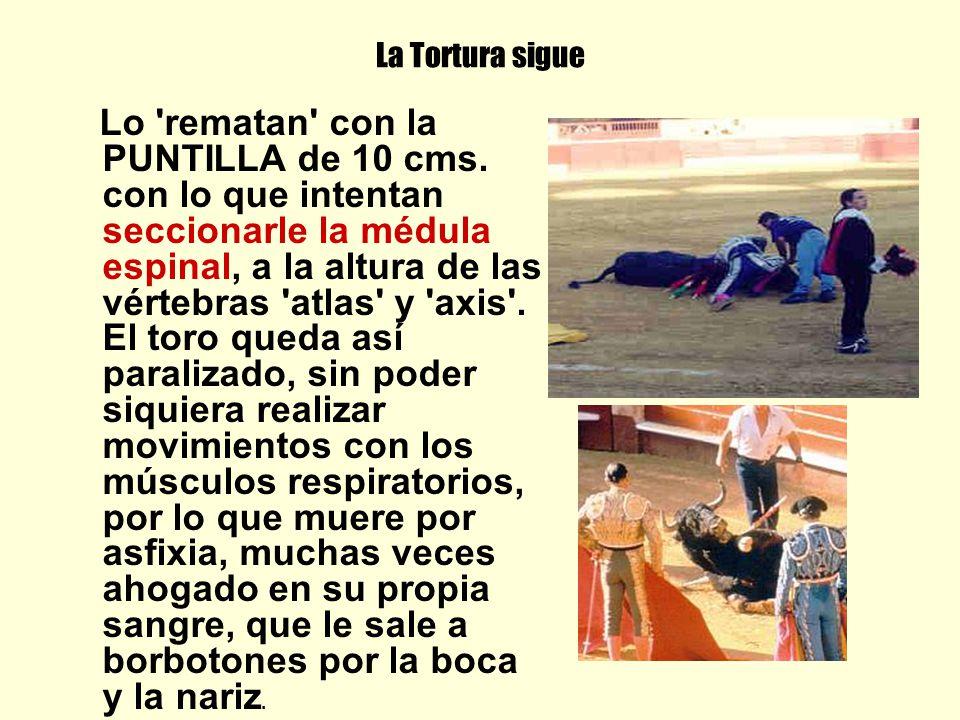 La Tortura sigue Lo 'rematan' con la PUNTILLA de 10 cms. con lo que intentan seccionarle la médula espinal, a la altura de las vértebras 'atlas' y 'ax