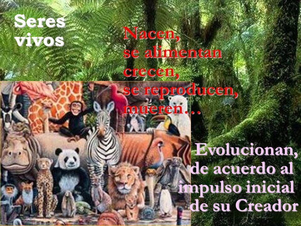 Seresvivos Nacen, se alimentan crecen, se reproducen, mueren… Evolucionan, de acuerdo al impulso inicial de su Creador