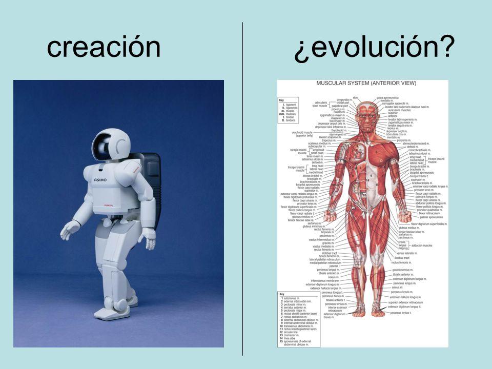 creación ¿evolución?