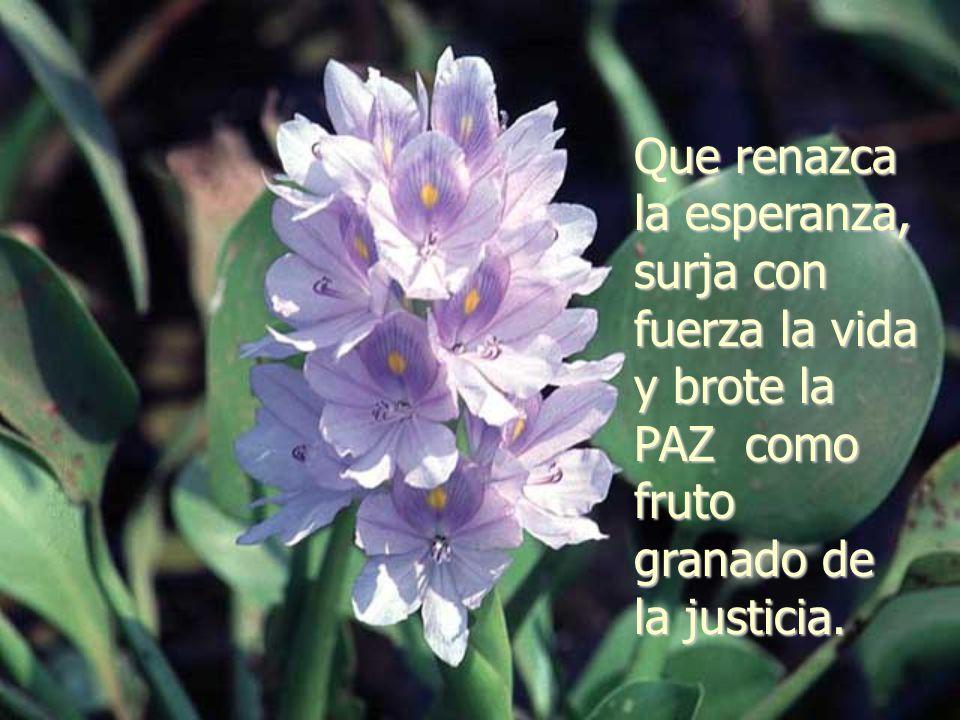 Que renazca la esperanza, surja con fuerza la vida y brote la PAZ como fruto granado de la justicia.