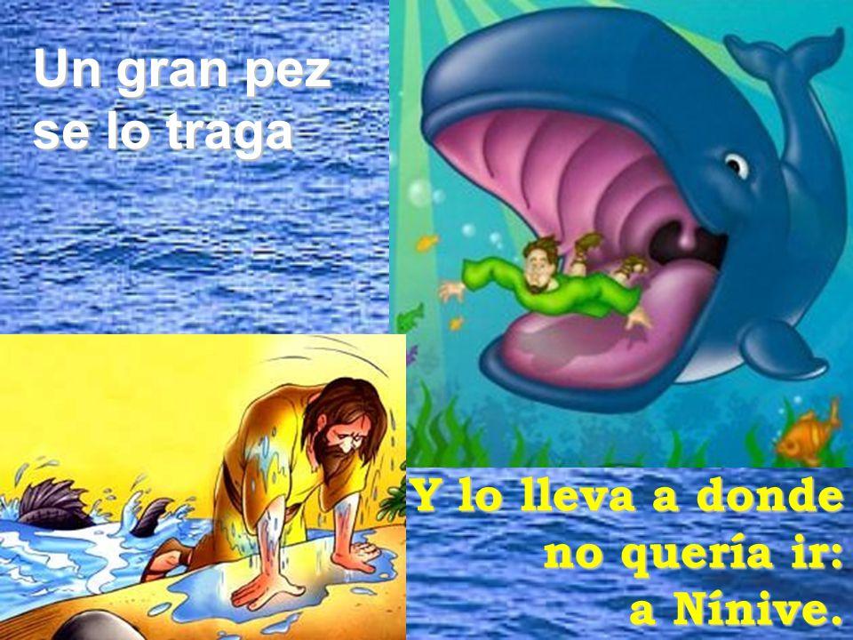Un gran pez se lo traga Y lo lleva a donde no quería ir: a Nínive.