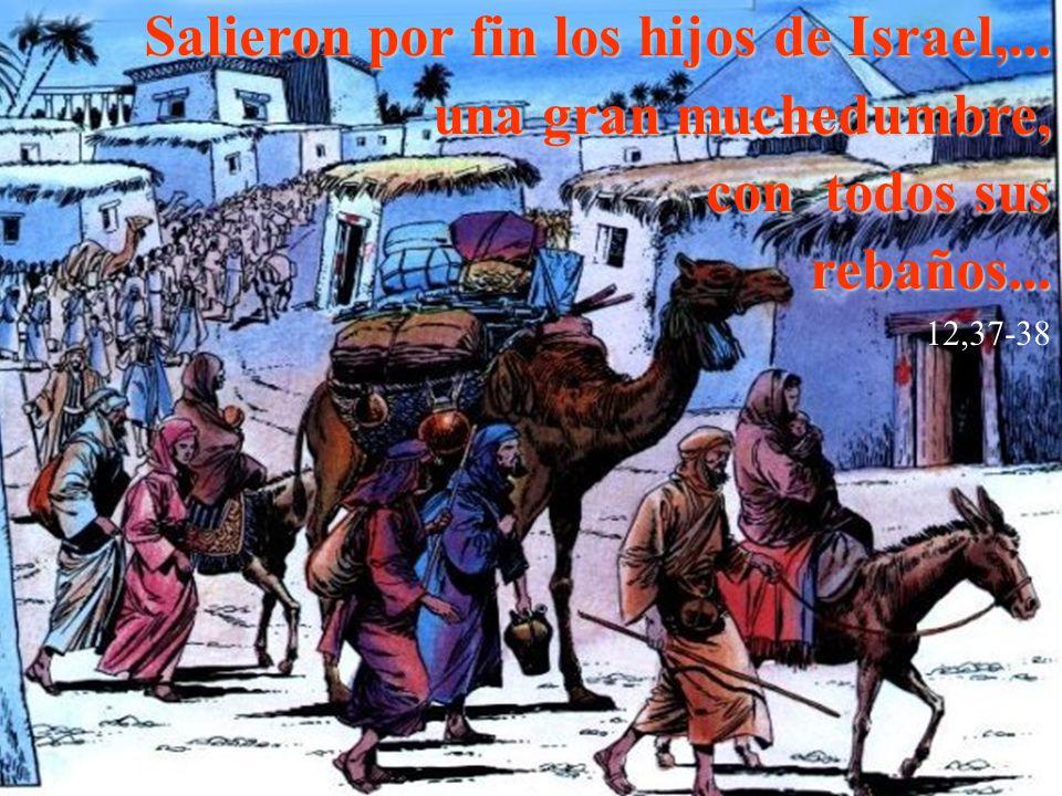 Salieron por fin los hijos de Israel,... una gran muchedumbre, con todos sus rebaños... 12,37-38