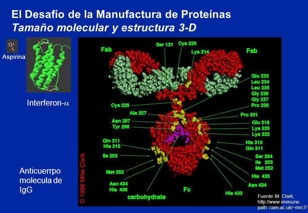 El Desafío de la Manufactura de Proteínas Tamaño molecular y estructura 3-D Fuente: M. Clark, http://www-immuno. path. cam.ac.uk/~mrc7/ Anticuerrpo mo
