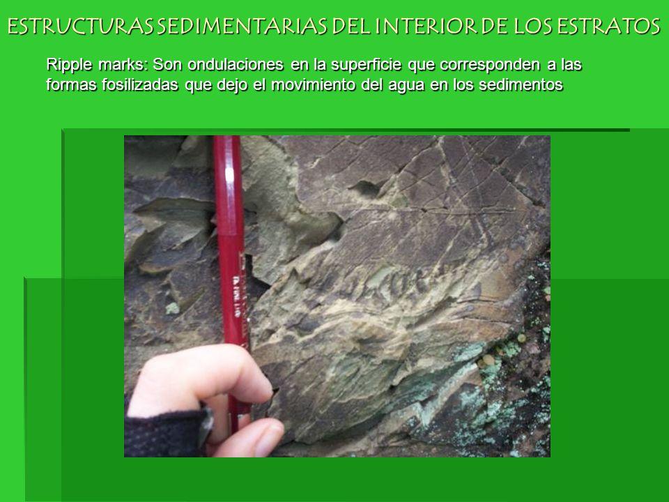 Ripple marks: Son ondulaciones en la superficie que corresponden a las formas fosilizadas que dejo el movimiento del agua en los sedimentos ESTRUCTURA