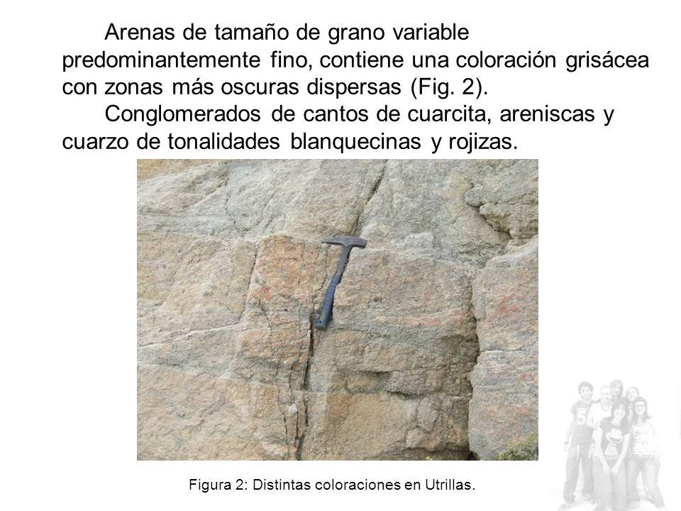 Arenas de tamaño de grano variable predominantemente fino, contiene una coloración grisácea con zonas más oscuras dispersas (Fig.