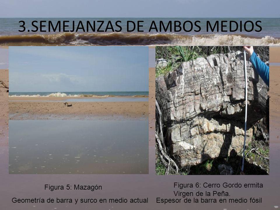 SEMEJANZAS DE AMBOS MEDIOS Ripples en medio actual Ripples en medio fósil Figura 7: Islantilla, LepeFigura 8: Ermita Viergen de la Peña