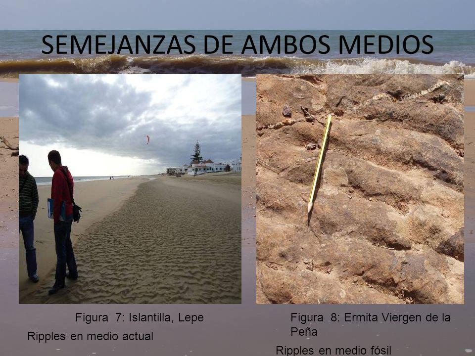 SEMEJANZAS DE AMBOS MEDIOS Ordenamiento interno medio actual Laminación medio fósil Figura 9Figura 10: Ermita Virgen de la Peña