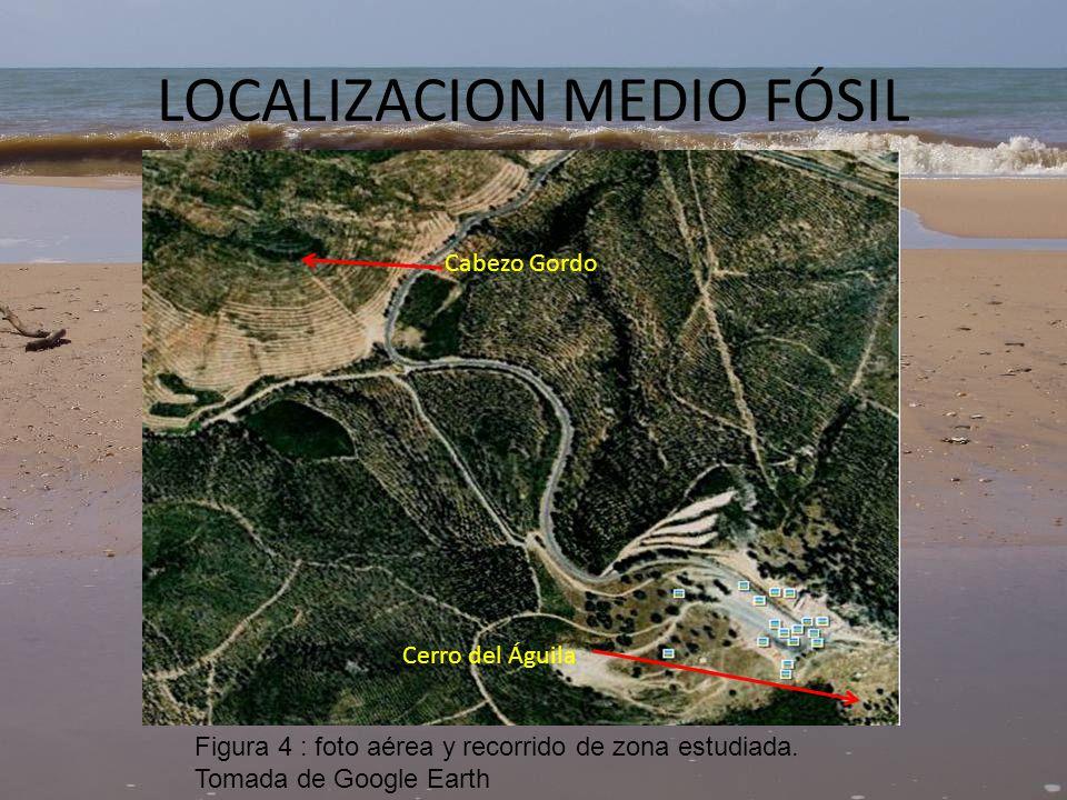 3.SEMEJANZAS DE AMBOS MEDIOS Geometría de barra y surco en medio actualEspesor de la barra en medio fósil Figura 5: Mazagón Figura 6: Cerro Gordo ermita Virgen de la Peña.