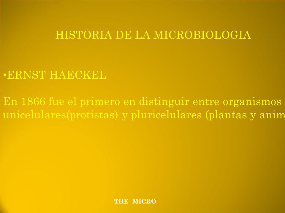 HISTORIA DE LA MICROBIOLOGIA ERNST HAECKEL En 1866 fue el primero en distinguir entre organismos unicelulares(protistas) y pluricelulares (plantas y animales) HISTORIA DE LA MICROBIOLOGIA ERNST HAECKEL En 1866 fue el primero en distinguir entre organismos unicelulares(protistas) y pluricelulares (plantas y animales) THE MICRO