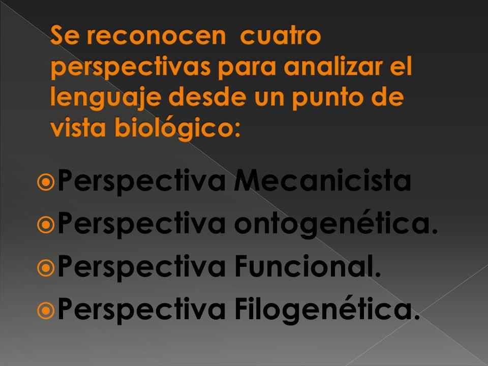 Perspectiva Mecanicista Perspectiva ontogenética. Perspectiva Funcional. Perspectiva Filogenética.