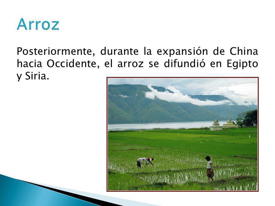 Posteriormente, durante la expansión de China hacia Occidente, el arroz se difundió en Egipto y Siria.