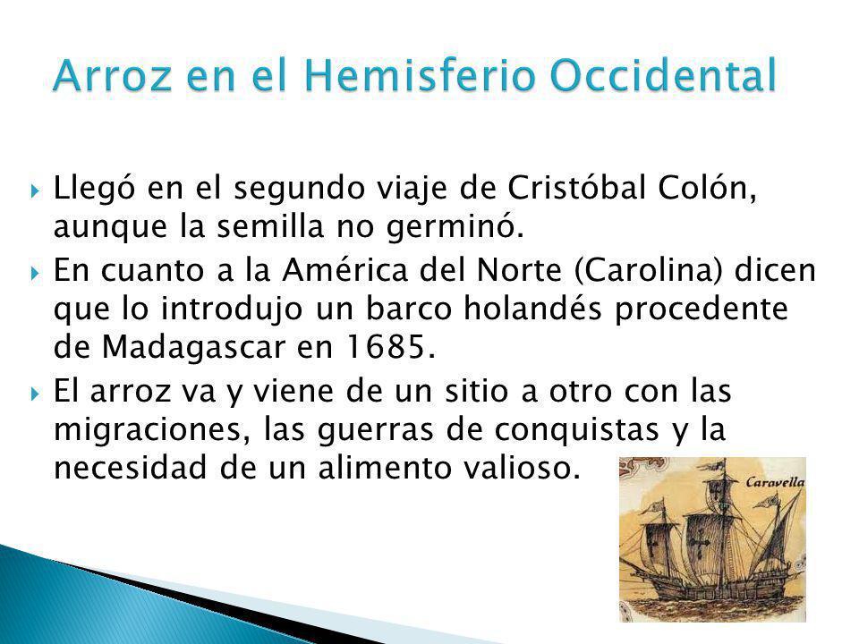 Llegó en el segundo viaje de Cristóbal Colón, aunque la semilla no germinó. En cuanto a la América del Norte (Carolina) dicen que lo introdujo un barc