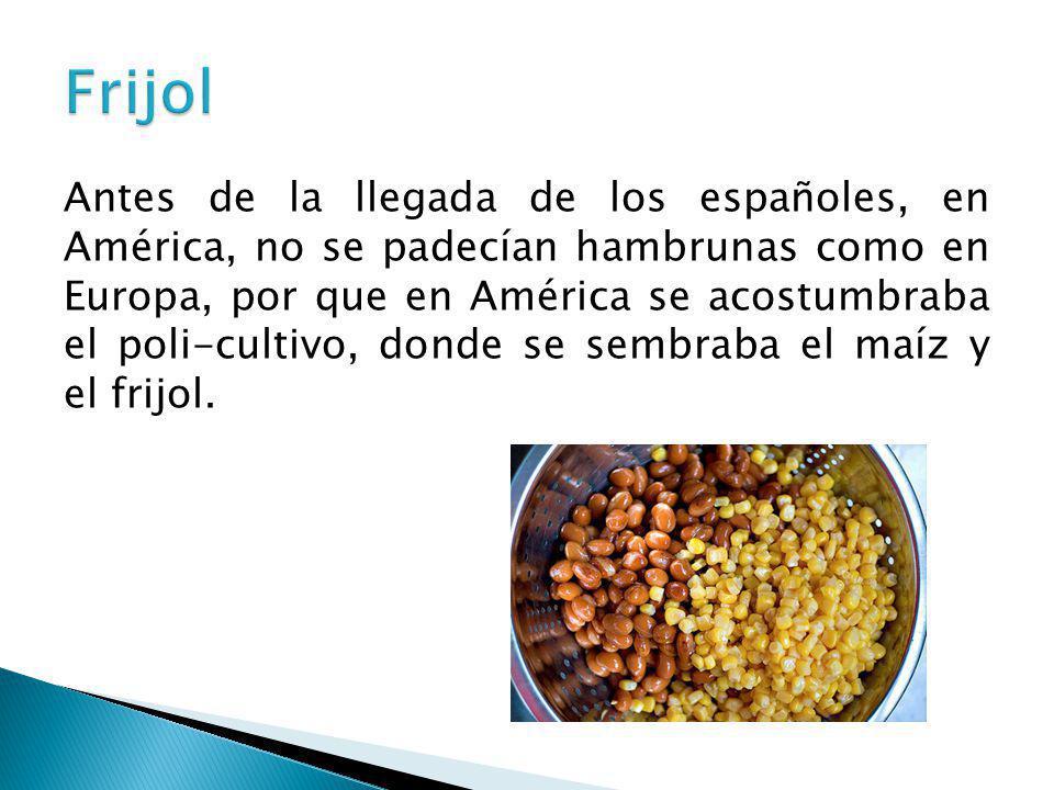 Antes de la llegada de los españoles, en América, no se padecían hambrunas como en Europa, por que en América se acostumbraba el poli-cultivo, donde s