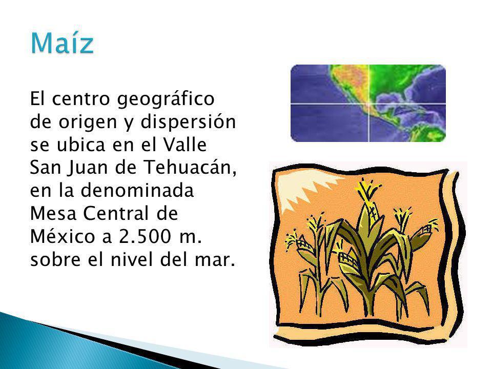 El centro geográfico de origen y dispersión se ubica en el Valle San Juan de Tehuacán, en la denominada Mesa Central de México a 2.500 m. sobre el niv