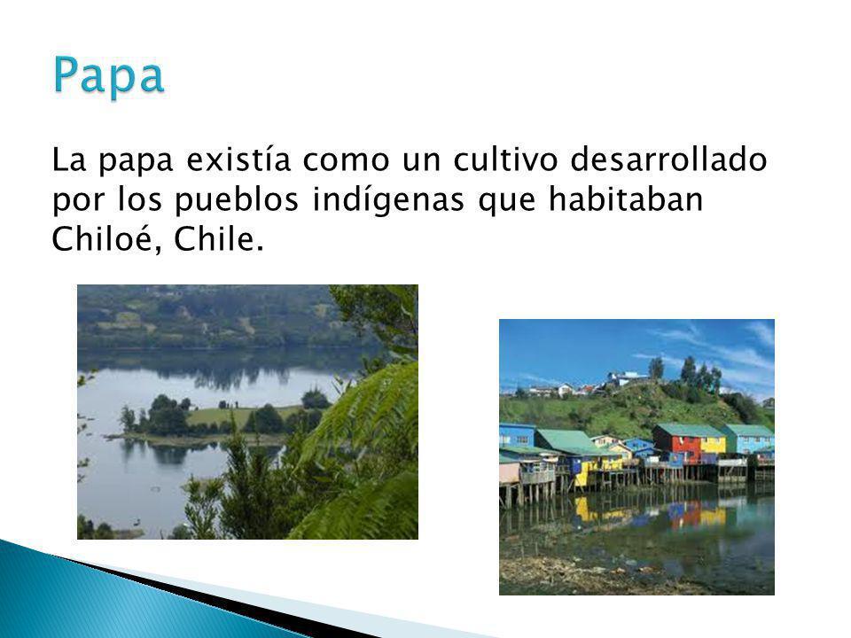 La papa existía como un cultivo desarrollado por los pueblos indígenas que habitaban Chiloé, Chile.