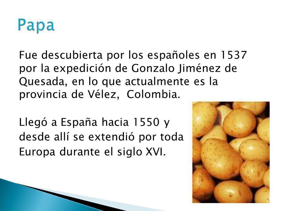 Fue descubierta por los españoles en 1537 por la expedición de Gonzalo Jiménez de Quesada, en lo que actualmente es la provincia de Vélez, Colombia. L