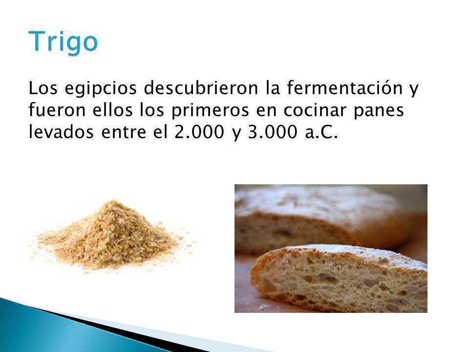 Los egipcios descubrieron la fermentación y fueron ellos los primeros en cocinar panes levados entre el 2.000 y 3.000 a.C.