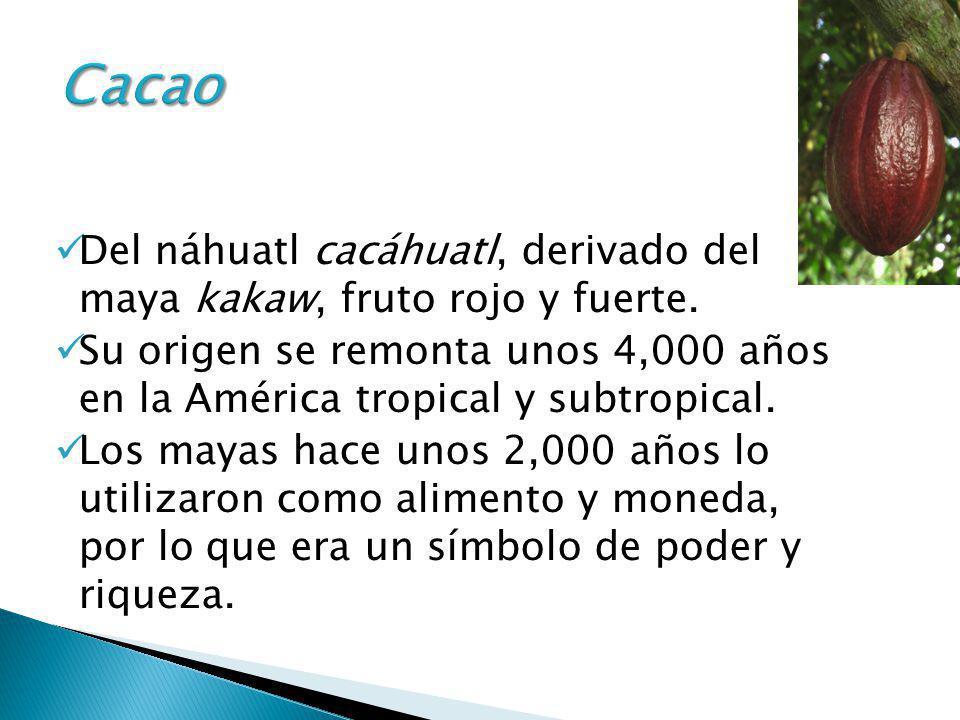 Del náhuatl cacáhuatl, derivado del maya kakaw, fruto rojo y fuerte. Su origen se remonta unos 4,000 años en la América tropical y subtropical. Los ma