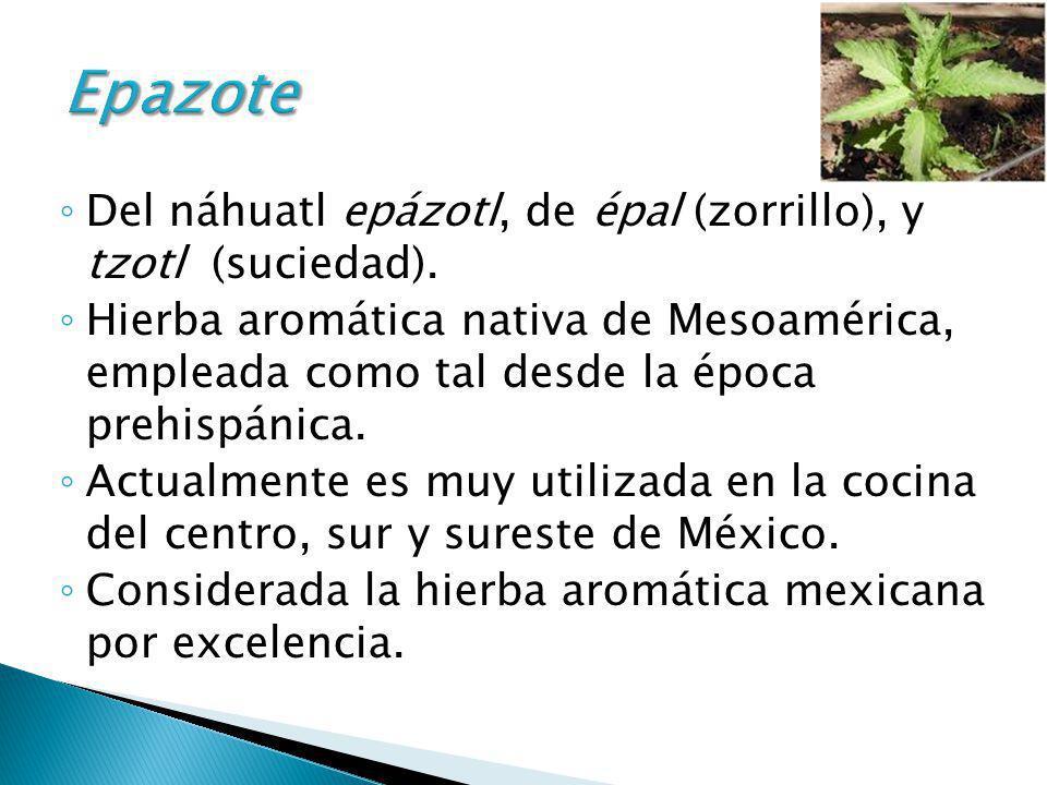 Del náhuatl epázotl, de épal (zorrillo), y tzotl (suciedad). Hierba aromática nativa de Mesoamérica, empleada como tal desde la época prehispánica. Ac