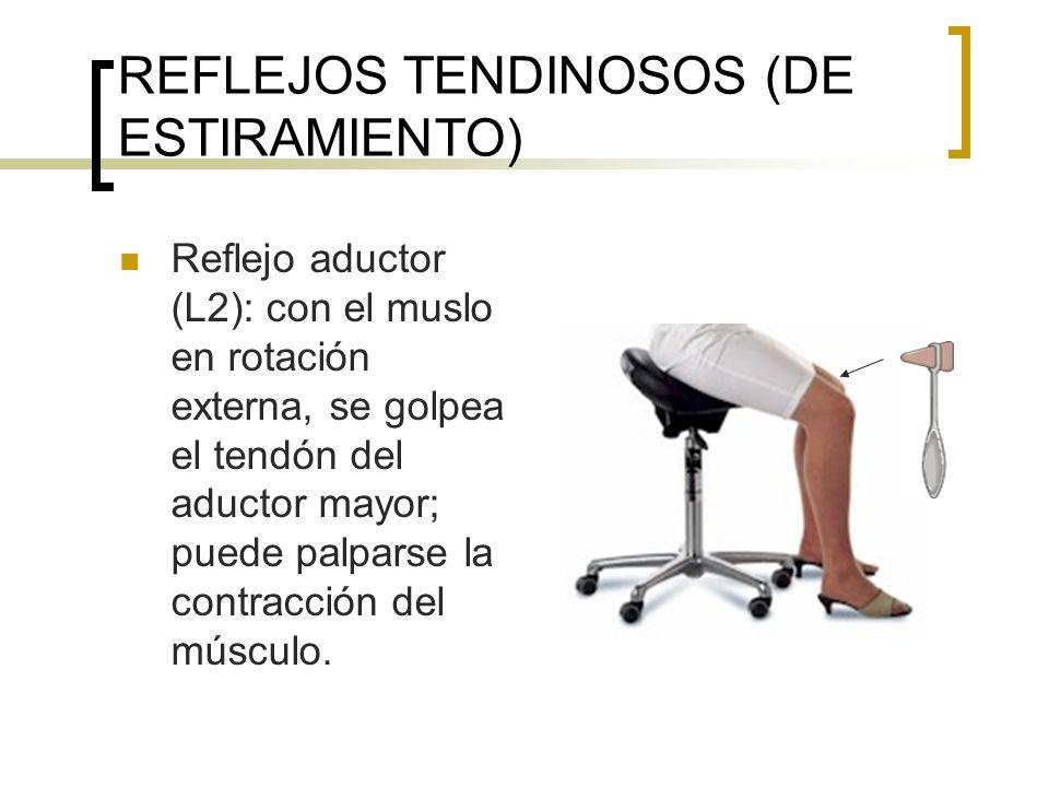 REFLEJOS TENDINOSOS (DE ESTIRAMIENTO) Reflejo aductor (L2): con el muslo en rotación externa, se golpea el tendón del aductor mayor; puede palparse la