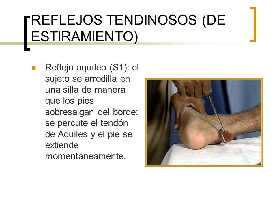 REFLEJOS TENDINOSOS (DE ESTIRAMIENTO) Reflejo aquíleo (S1): el sujeto se arrodilla en una silla de manera que los pies sobresalgan del borde; se percu