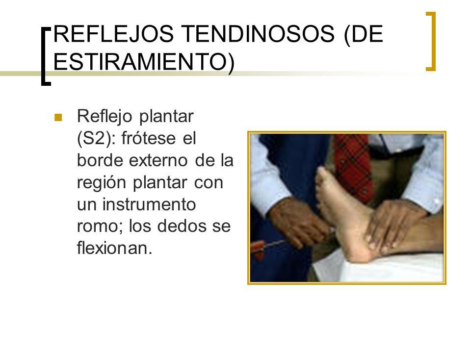 REFLEJOS TENDINOSOS (DE ESTIRAMIENTO) Reflejo plantar (S2): frótese el borde externo de la región plantar con un instrumento romo; los dedos se flexio