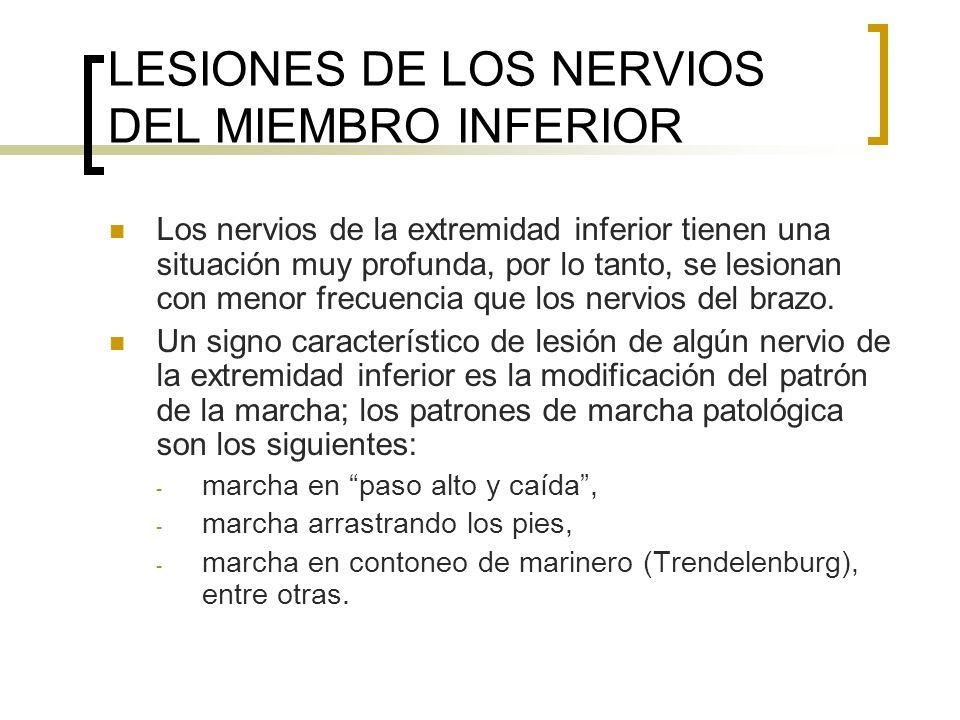LESIONES DE LOS NERVIOS DEL MIEMBRO INFERIOR Los nervios de la extremidad inferior tienen una situación muy profunda, por lo tanto, se lesionan con me