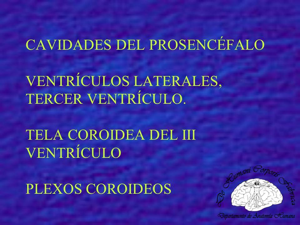 CAVIDADES DEL PROSENCÉFALO VENTRÍCULOS LATERALES, TERCER VENTRÍCULO. TELA COROIDEA DEL III VENTRÍCULO PLEXOS COROIDEOS