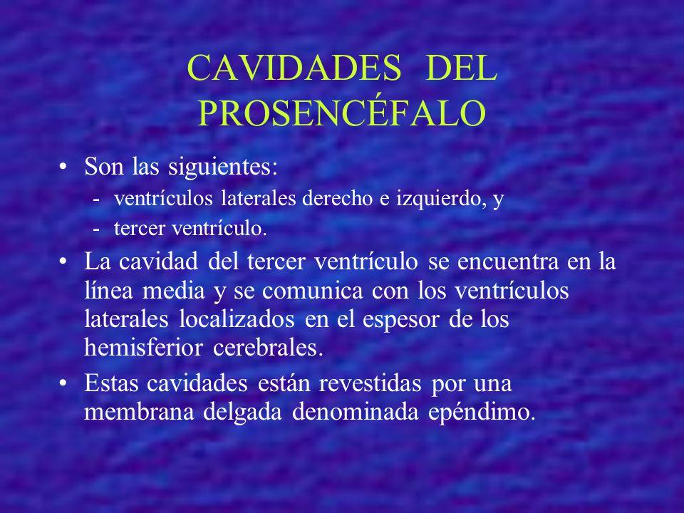 CAVIDADES DEL PROSENCÉFALO Son las siguientes: - ventrículos laterales derecho e izquierdo, y - tercer ventrículo. La cavidad del tercer ventrículo se