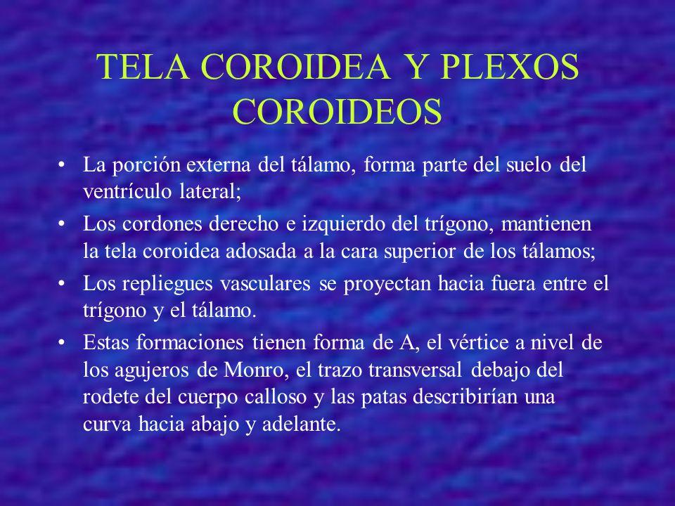 TELA COROIDEA Y PLEXOS COROIDEOS La porción externa del tálamo, forma parte del suelo del ventrículo lateral; Los cordones derecho e izquierdo del trí