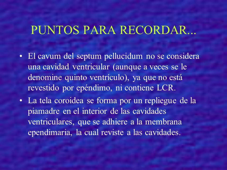 PUNTOS PARA RECORDAR... El cavum del septum pellucidum no se considera una cavidad ventricular (aunque a veces se le denomine quinto ventrículo), ya q