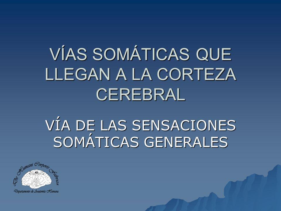 VÍAS SOMÁTICAS QUE LLEGAN A LA CORTEZA CEREBRAL VÍA DE LAS SENSACIONES SOMÁTICAS GENERALES