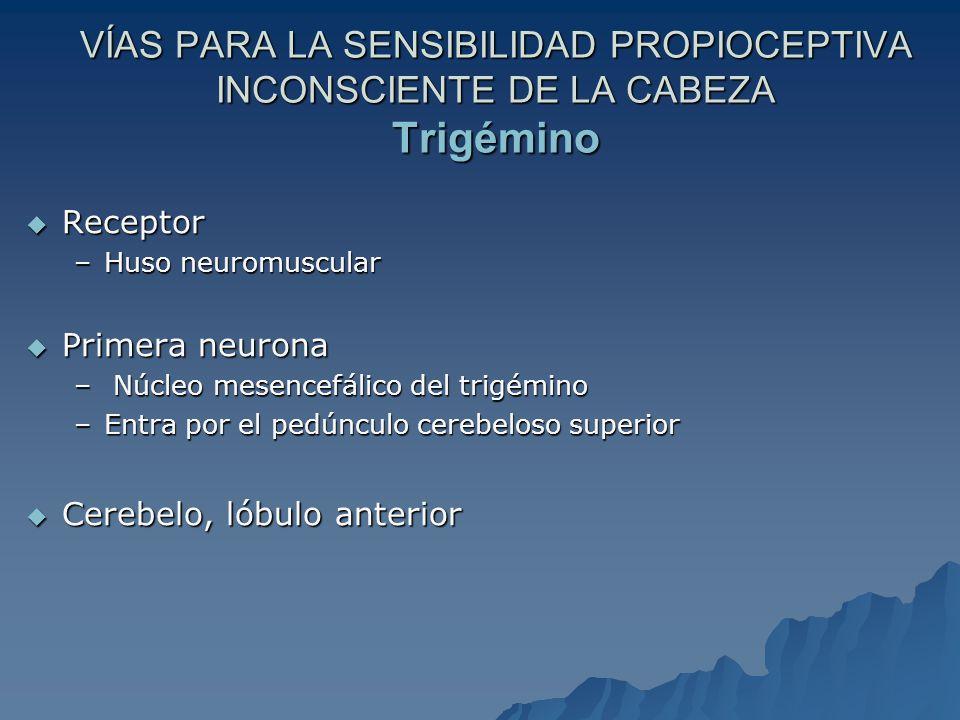 VÍAS PARA LA SENSIBILIDAD PROPIOCEPTIVA INCONSCIENTE DE LA CABEZA Trigémino Receptor Receptor –Huso neuromuscular Primera neurona Primera neurona – Núcleo mesencefálico del trigémino –Entra por el pedúnculo cerebeloso superior Cerebelo, lóbulo anterior Cerebelo, lóbulo anterior