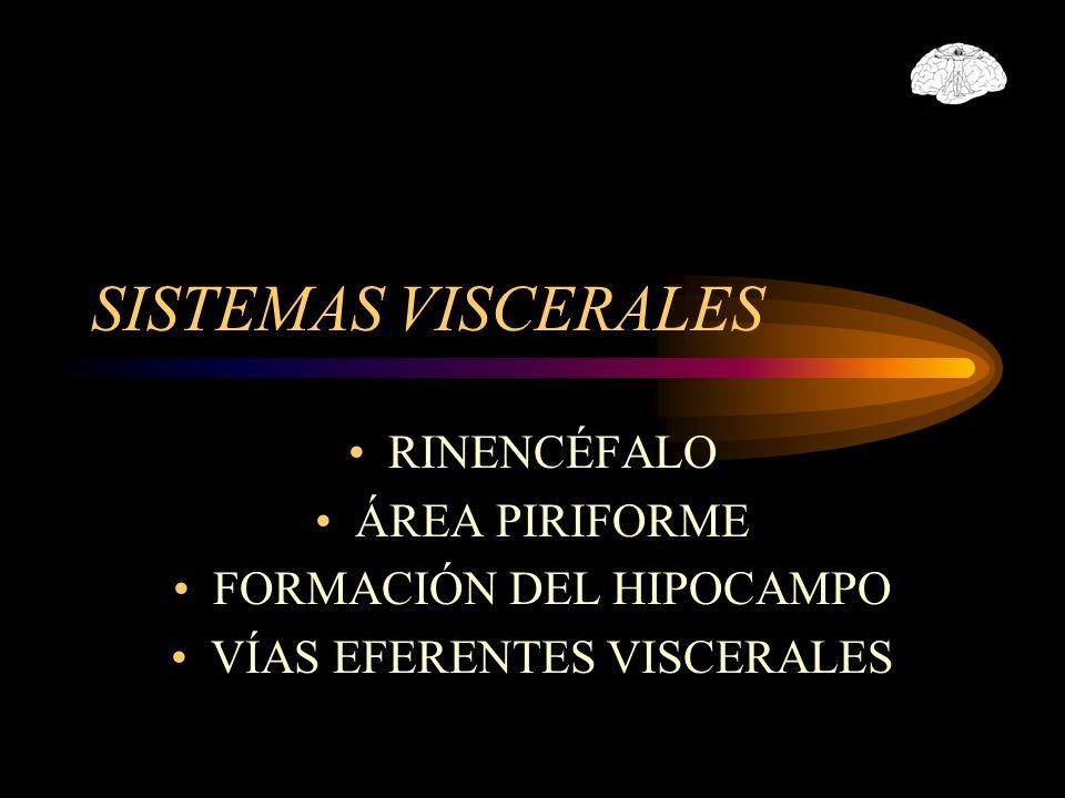SISTEMAS VISCERALES RINENCÉFALO ÁREA PIRIFORME FORMACIÓN DEL HIPOCAMPO VÍAS EFERENTES VISCERALES