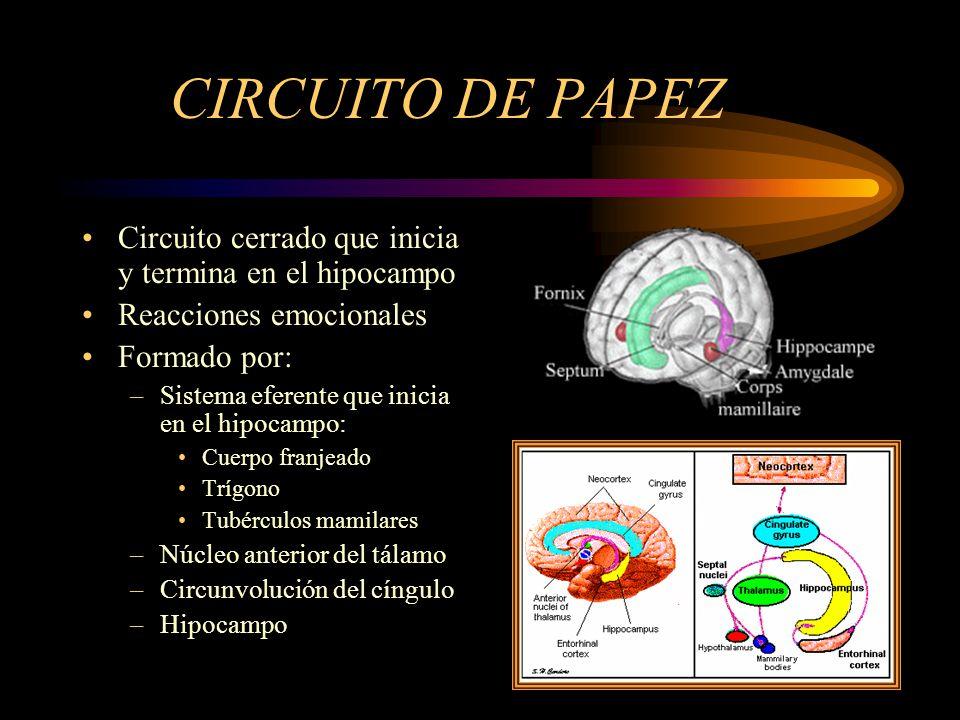 CIRCUITO DE PAPEZ Circuito cerrado que inicia y termina en el hipocampo Reacciones emocionales Formado por: –Sistema eferente que inicia en el hipocam