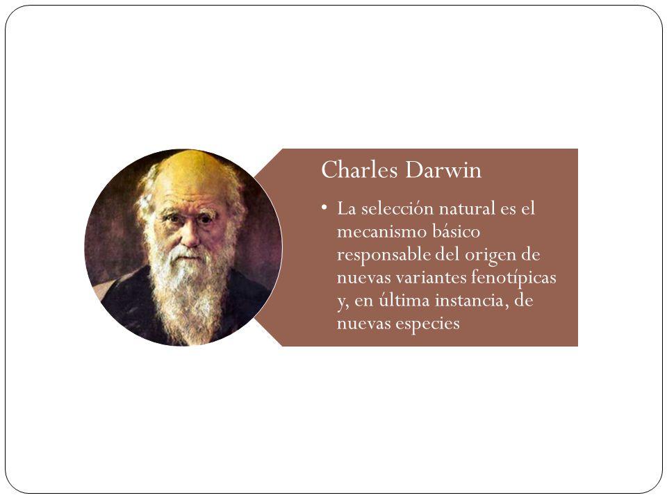 Charles Darwin La selección natural es el mecanismo básico responsable del origen de nuevas variantes fenotípicas y, en última instancia, de nuevas es