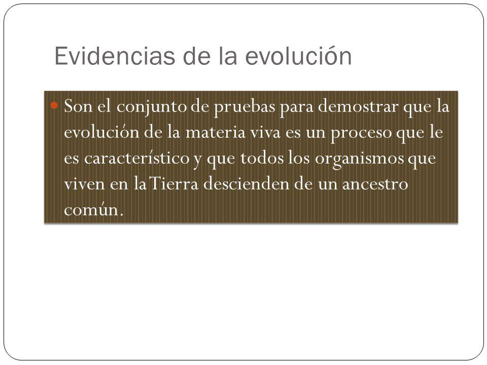 Evidencias de la evolución Son el conjunto de pruebas para demostrar que la evolución de la materia viva es un proceso que le es característico y que