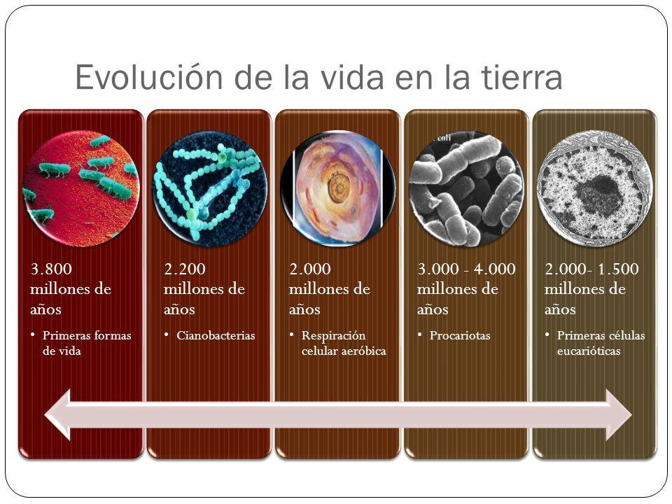 Evolución de la vida en la tierra 3.800 millones de años Primeras formas de vida 2.200 millones de años Cianobacterias 2.000 millones de años Respirac