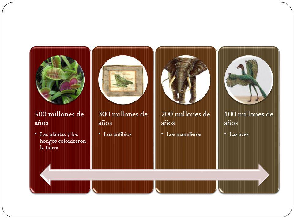 500 millones de años Las plantas y los hongos colonizaron la tierra 300 millones de años Los anfibios 200 millones de años Los mamíferos 100 millones