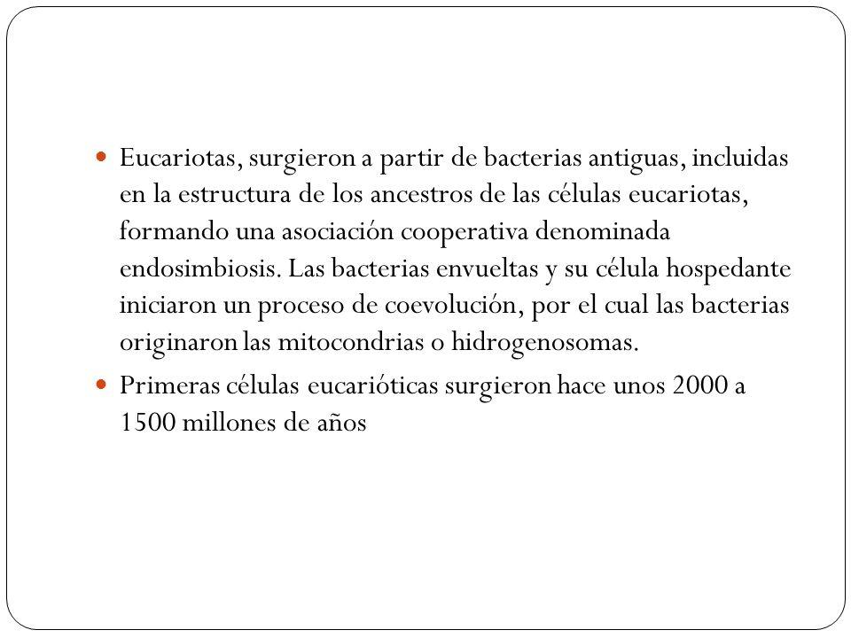 Eucariotas, surgieron a partir de bacterias antiguas, incluidas en la estructura de los ancestros de las células eucariotas, formando una asociación c