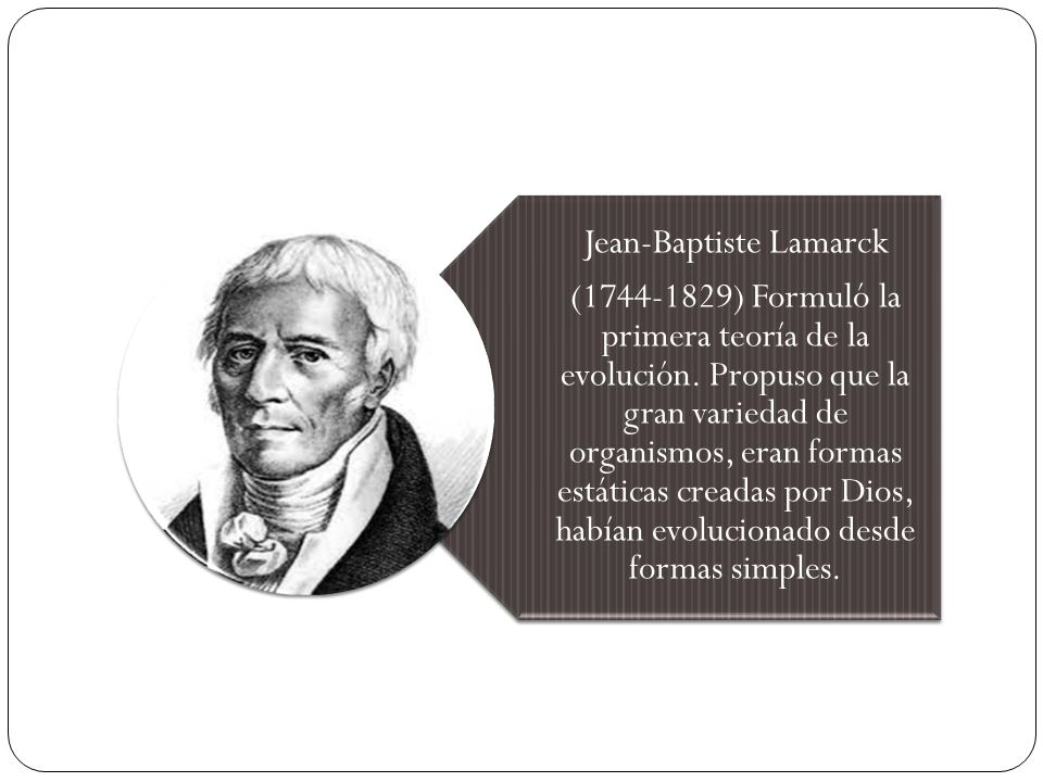 Jean-Baptiste Lamarck (1744-1829) Formuló la primera teoría de la evolución. Propuso que la gran variedad de organismos, eran formas estáticas creadas