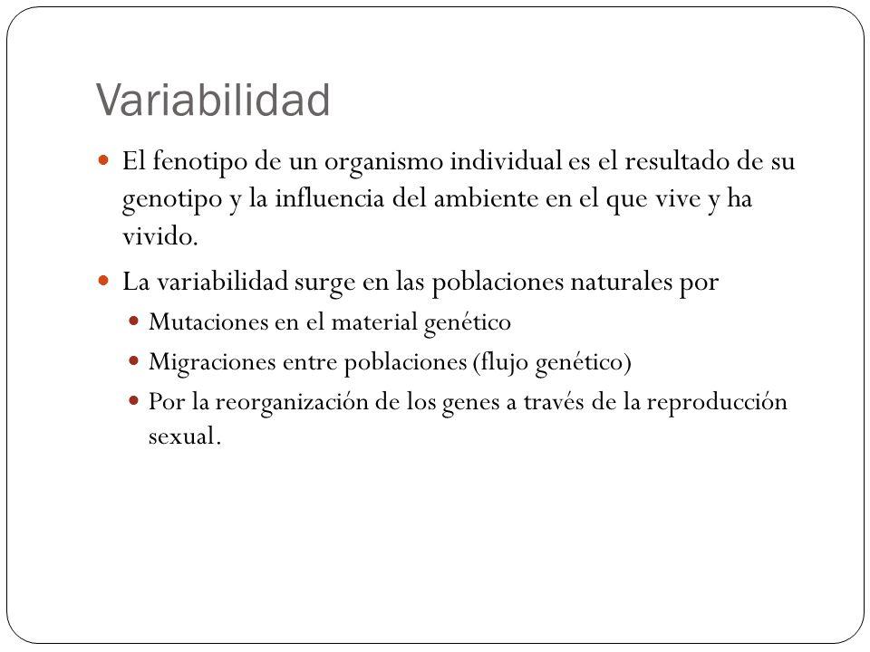 Variabilidad El fenotipo de un organismo individual es el resultado de su genotipo y la influencia del ambiente en el que vive y ha vivido. La variabi