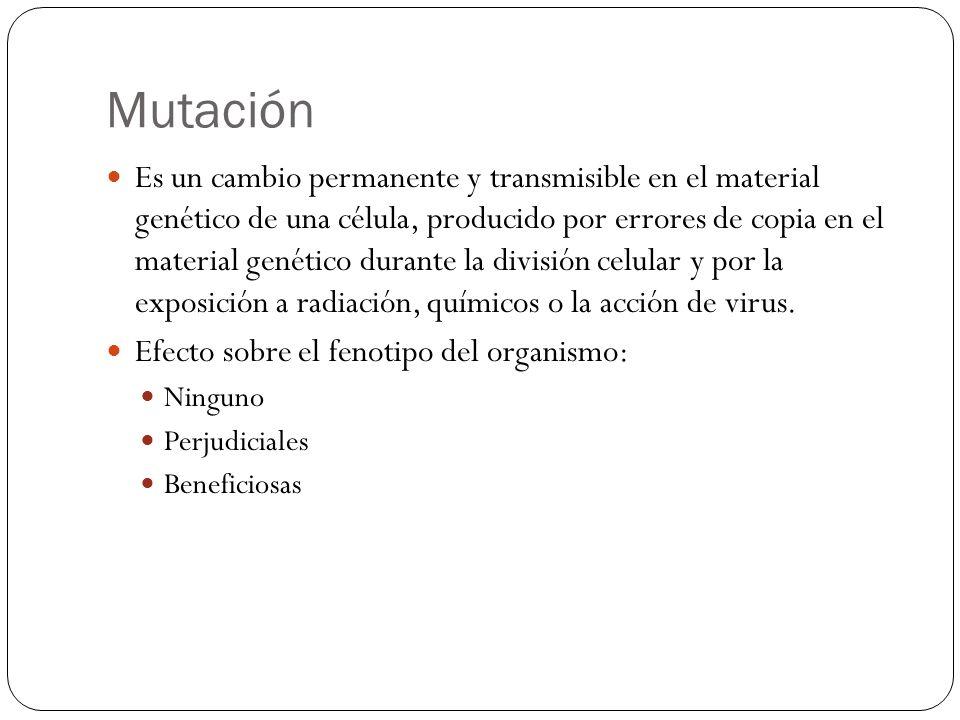 Mutación Es un cambio permanente y transmisible en el material genético de una célula, producido por errores de copia en el material genético durante