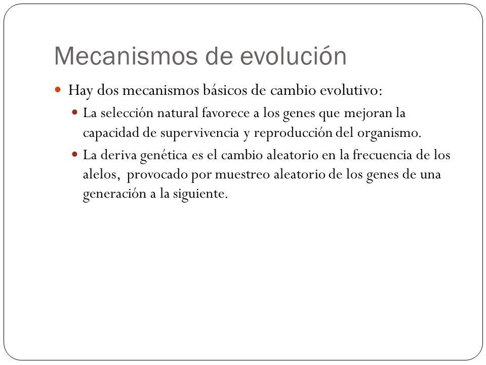 Mecanismos de evolución Hay dos mecanismos básicos de cambio evolutivo: La selección natural favorece a los genes que mejoran la capacidad de superviv