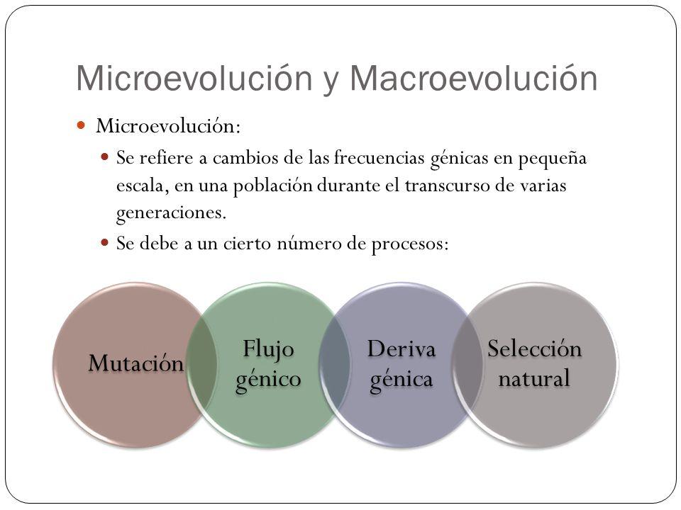 Microevolución y Macroevolución Microevolución: Se refiere a cambios de las frecuencias génicas en pequeña escala, en una población durante el transcu