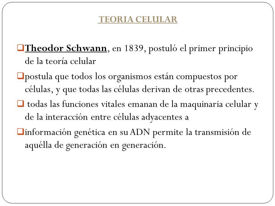 TEORIA CELULAR Theodor Schwann, en 1839, postuló el primer principio de la teoría celular postula que todos los organismos están compuestos por célula