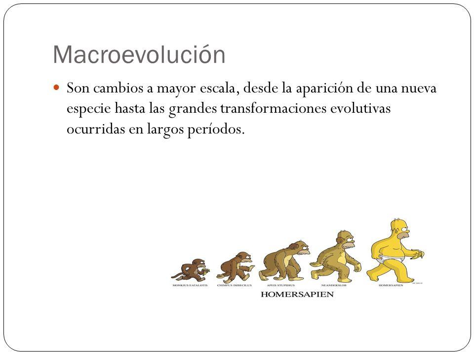 Son cambios a mayor escala, desde la aparición de una nueva especie hasta las grandes transformaciones evolutivas ocurridas en largos períodos. Macroe