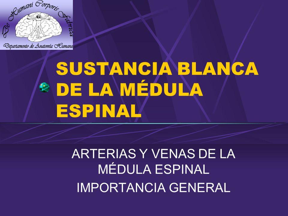 SUSTANCIA BLANCA DE LA MÉDULA ESPINAL ARTERIAS Y VENAS DE LA MÉDULA ESPINAL IMPORTANCIA GENERAL
